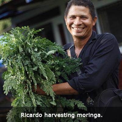 1-Nica-Ricardo-harvesting